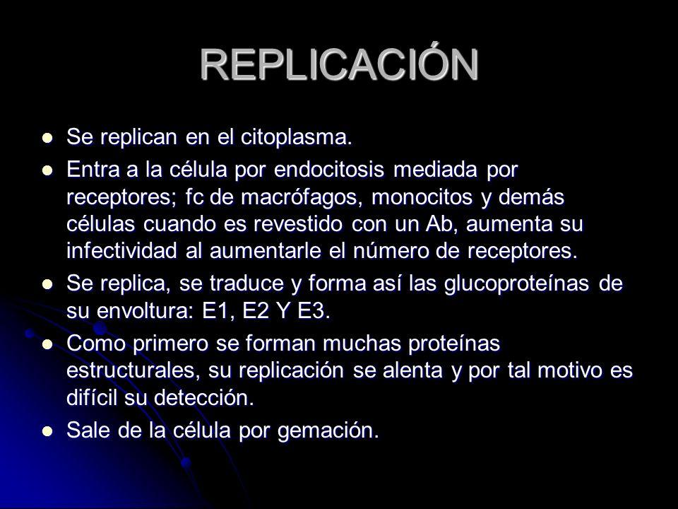 REPLICACIÓN Se replican en el citoplasma.