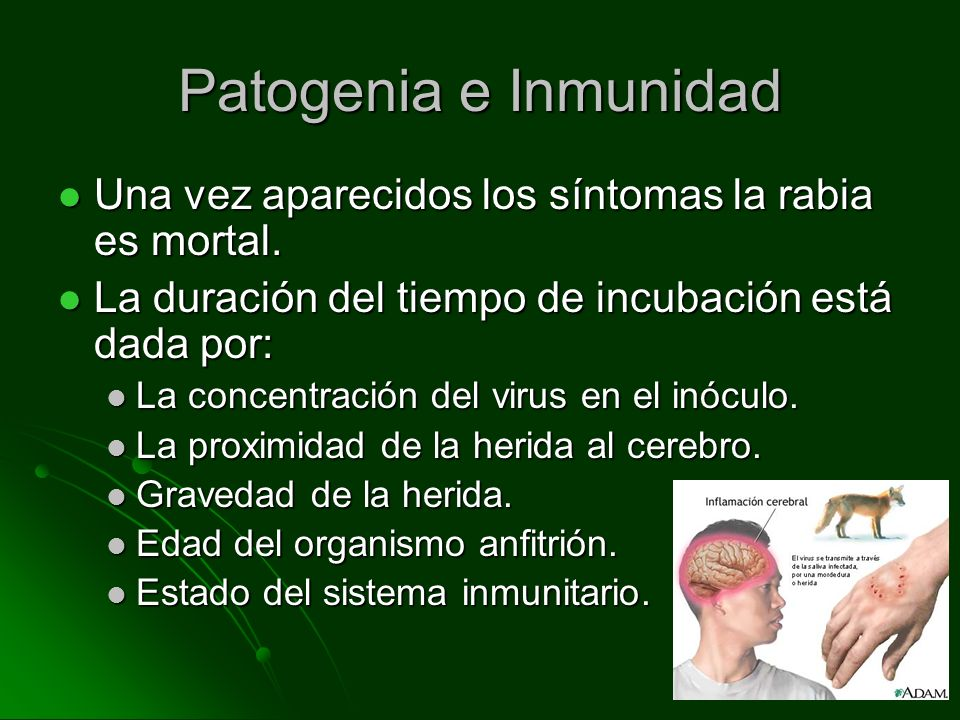Patogenia e Inmunidad Una vez aparecidos los síntomas la rabia es mortal. La duración del tiempo de incubación está dada por: