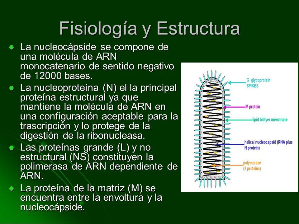 Fisiología y Estructura