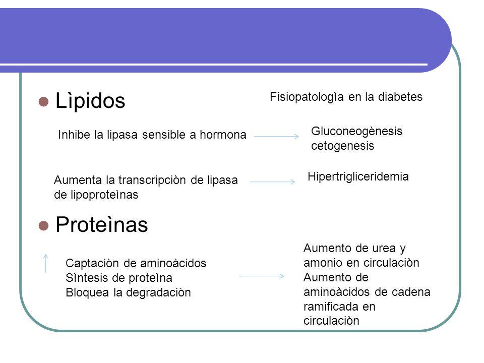 Lìpidos Proteìnas Fisiopatologìa en la diabetes Gluconeogènesis