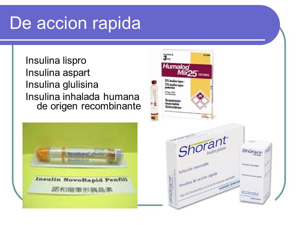 De accion rapida Insulina lispro Insulina aspart Insulina glulisina
