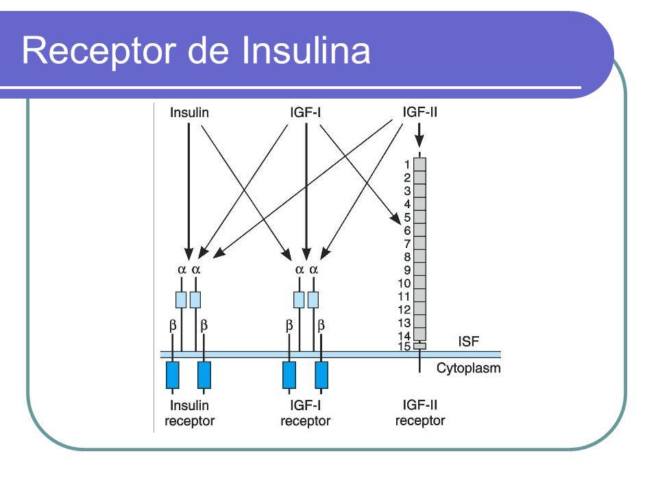 Receptor de Insulina