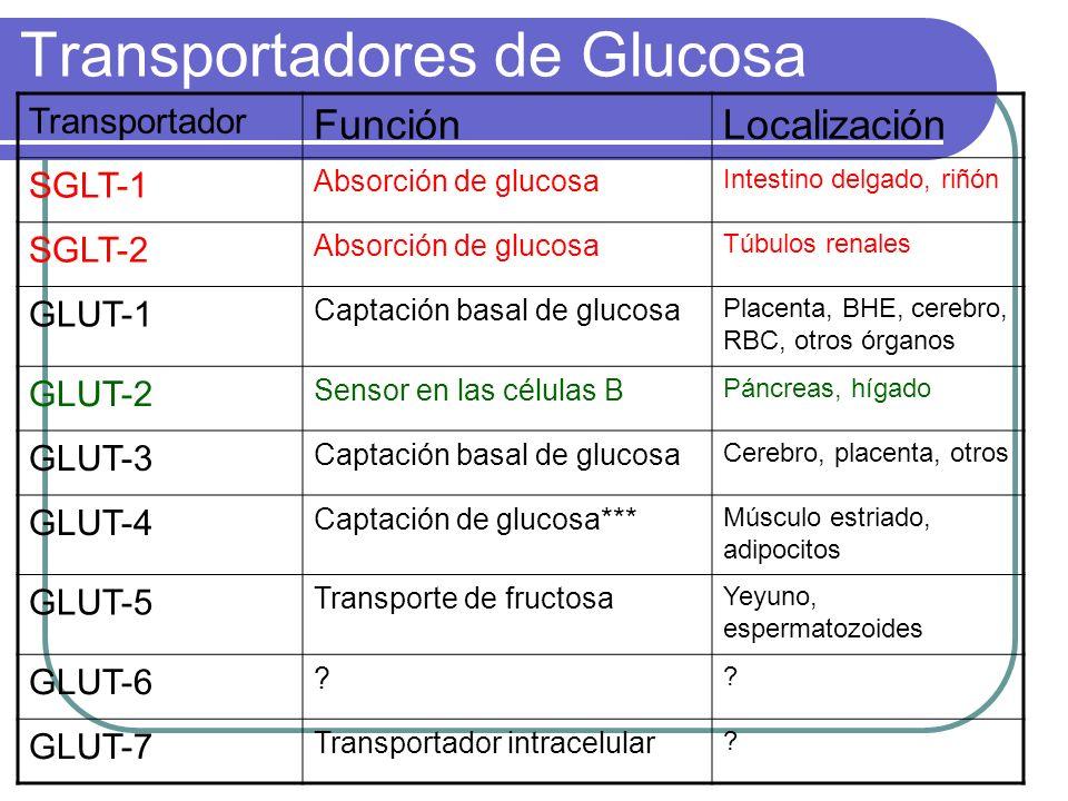 Transportadores de Glucosa