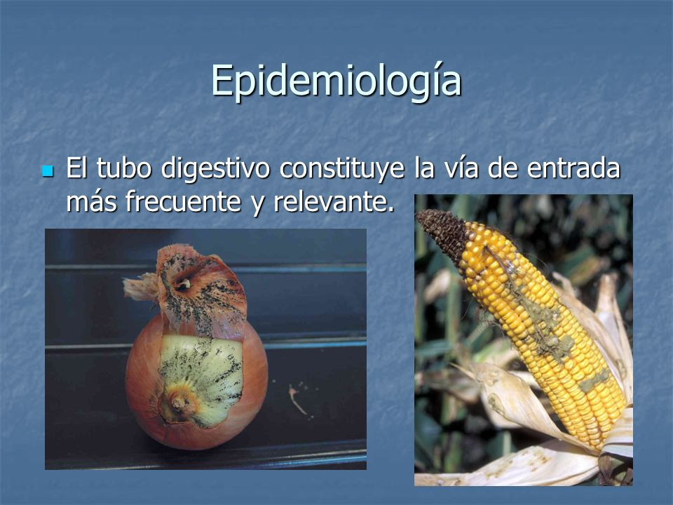 Epidemiología El tubo digestivo constituye la vía de entrada más frecuente y relevante.