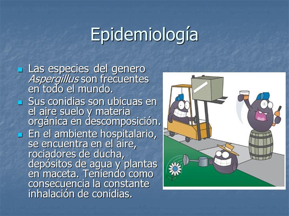 Epidemiología Las especies del genero Aspergillus son frecuentes en todo el mundo.