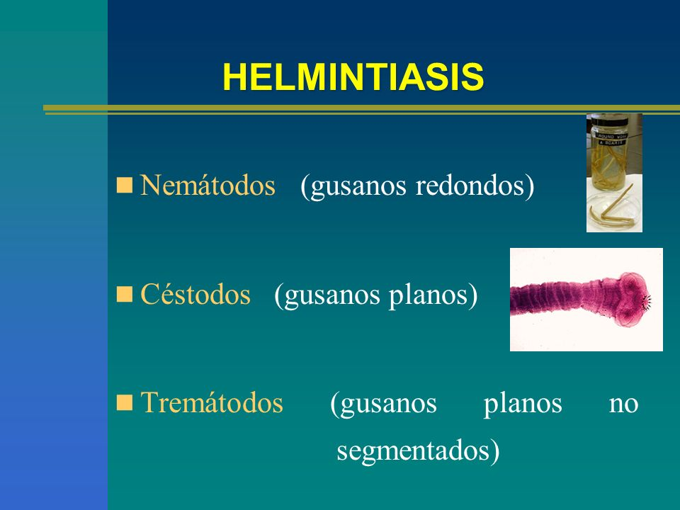 HELMINTIASIS Nemátodos (gusanos redondos) Céstodos (gusanos planos)
