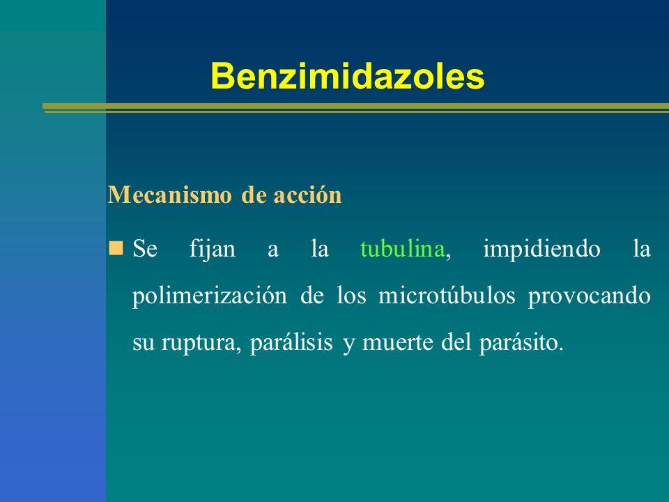 Benzimidazoles Mecanismo de acción