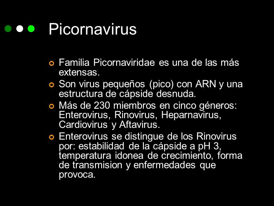 Picornavirus Familia Picornaviridae es una de las más extensas.