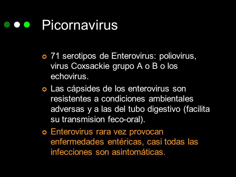 Picornavirus71 serotipos de Enterovirus: poliovirus, virus Coxsackie grupo A o B o los echovirus.