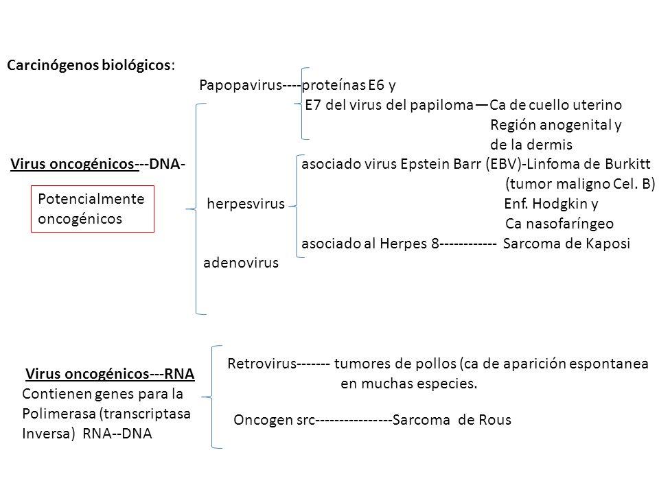 Carcinógenos biológicos: