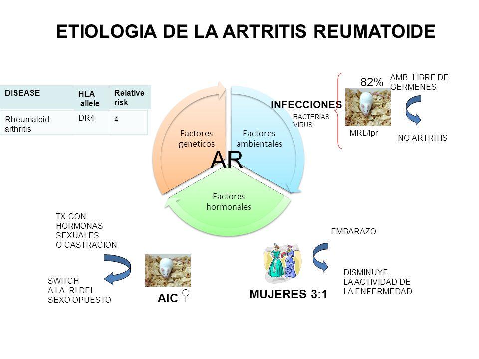 AR ETIOLOGIA DE LA ARTRITIS REUMATOIDE ♀ 82% MUJERES 3:1 AIC
