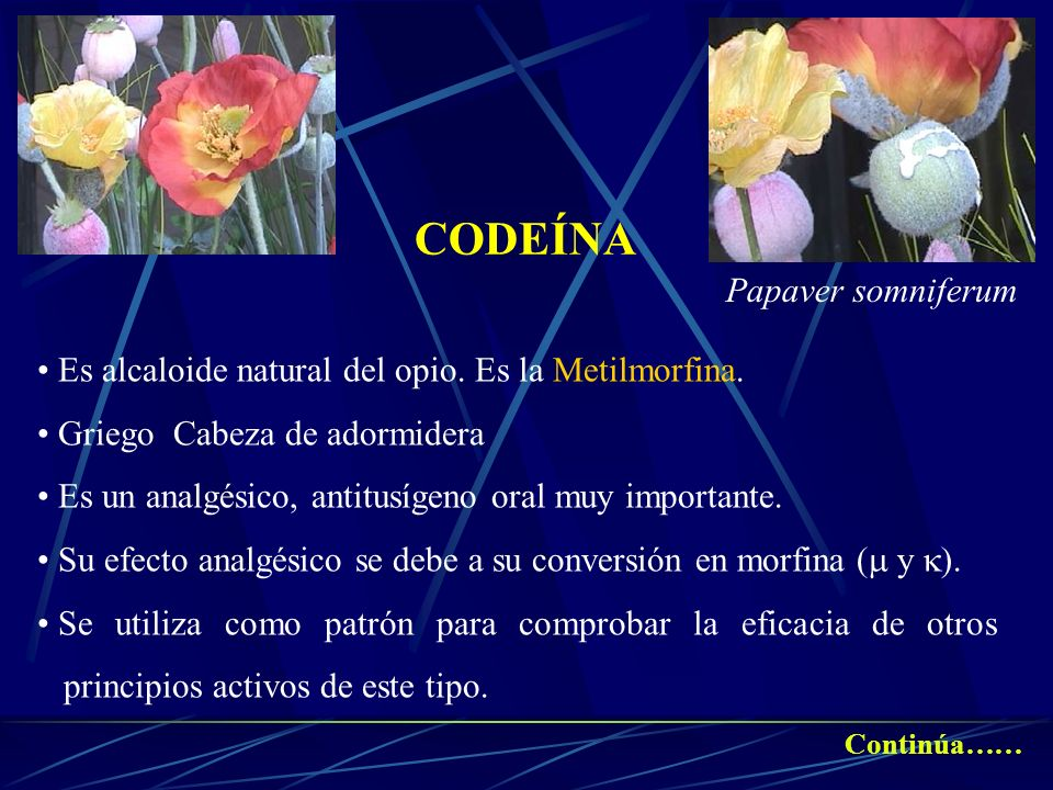 CODEÍNA Papaver somniferum