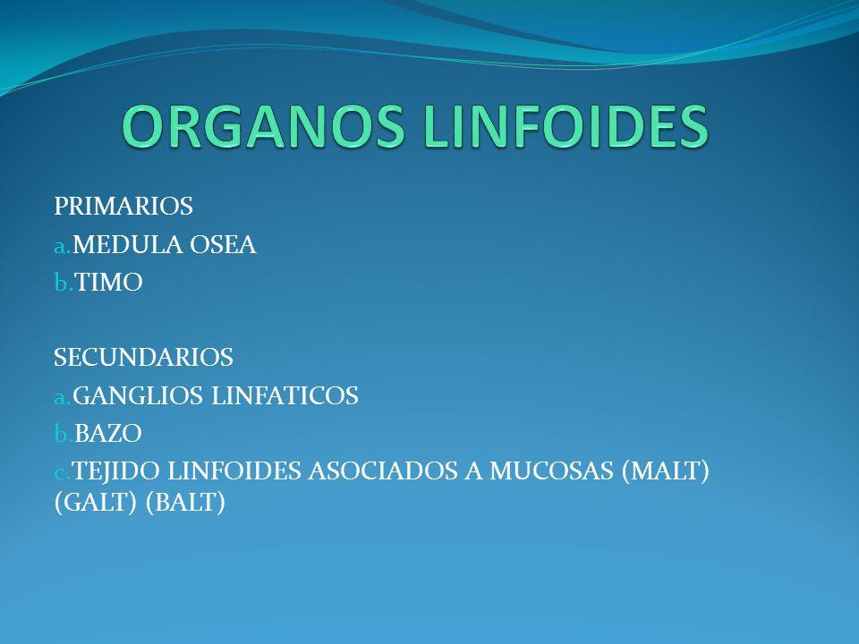 ORGANOS LINFOIDES PRIMARIOS MEDULA OSEA TIMO SECUNDARIOS