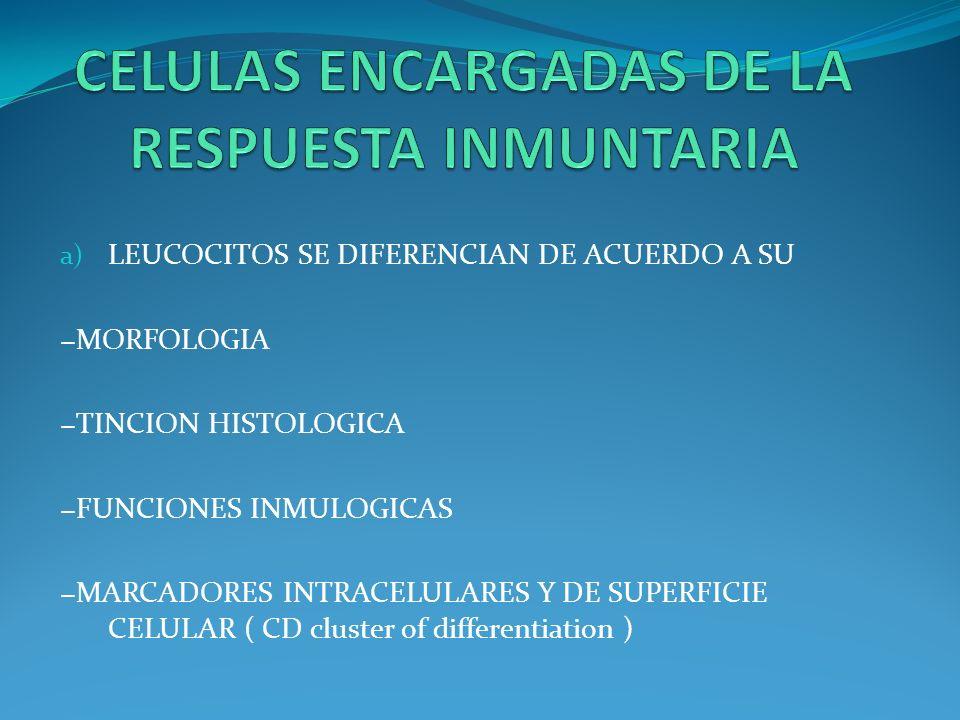 CELULAS ENCARGADAS DE LA RESPUESTA INMUNTARIA