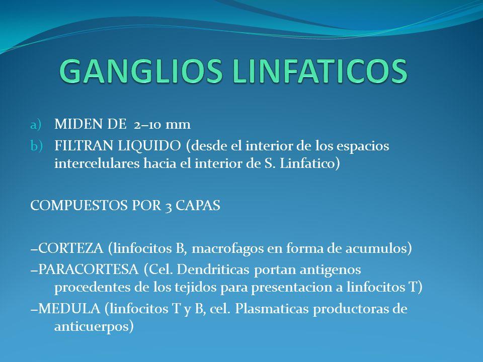 GANGLIOS LINFATICOS MIDEN DE 2−10 mm