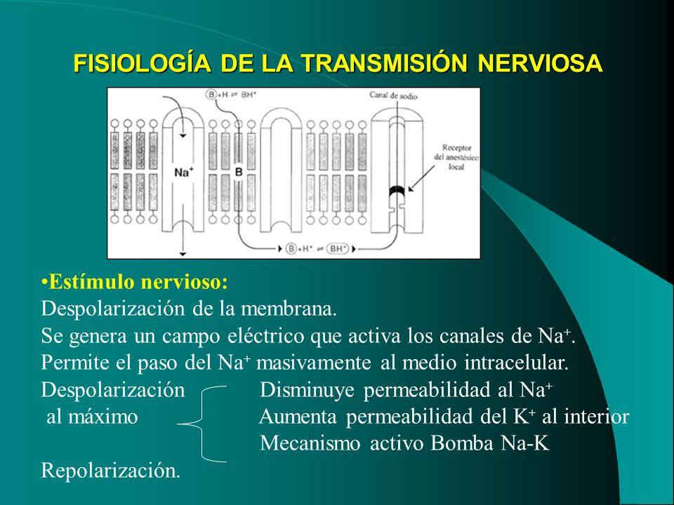 FISIOLOGÍA DE LA TRANSMISIÓN NERVIOSA