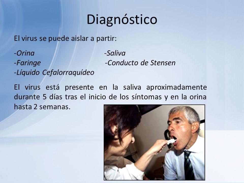 Diagnóstico El virus se puede aislar a partir: