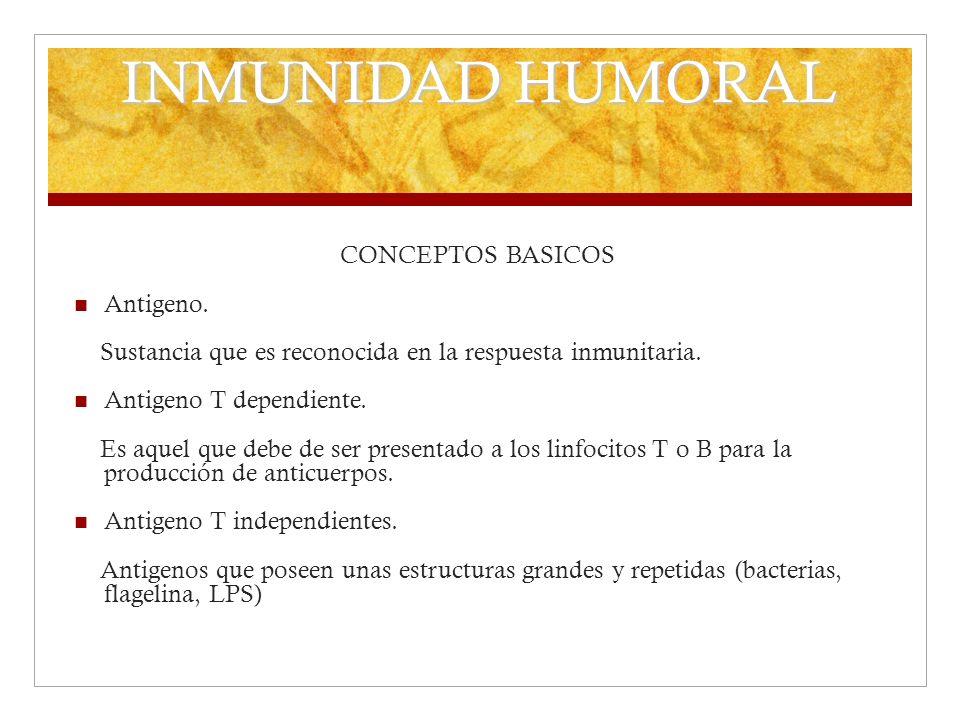 INMUNIDAD HUMORAL CONCEPTOS BASICOS Antigeno.