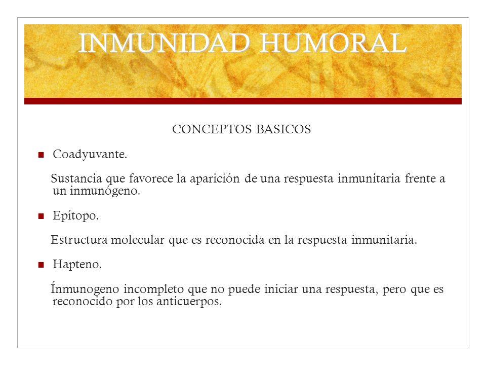 INMUNIDAD HUMORAL CONCEPTOS BASICOS Coadyuvante.