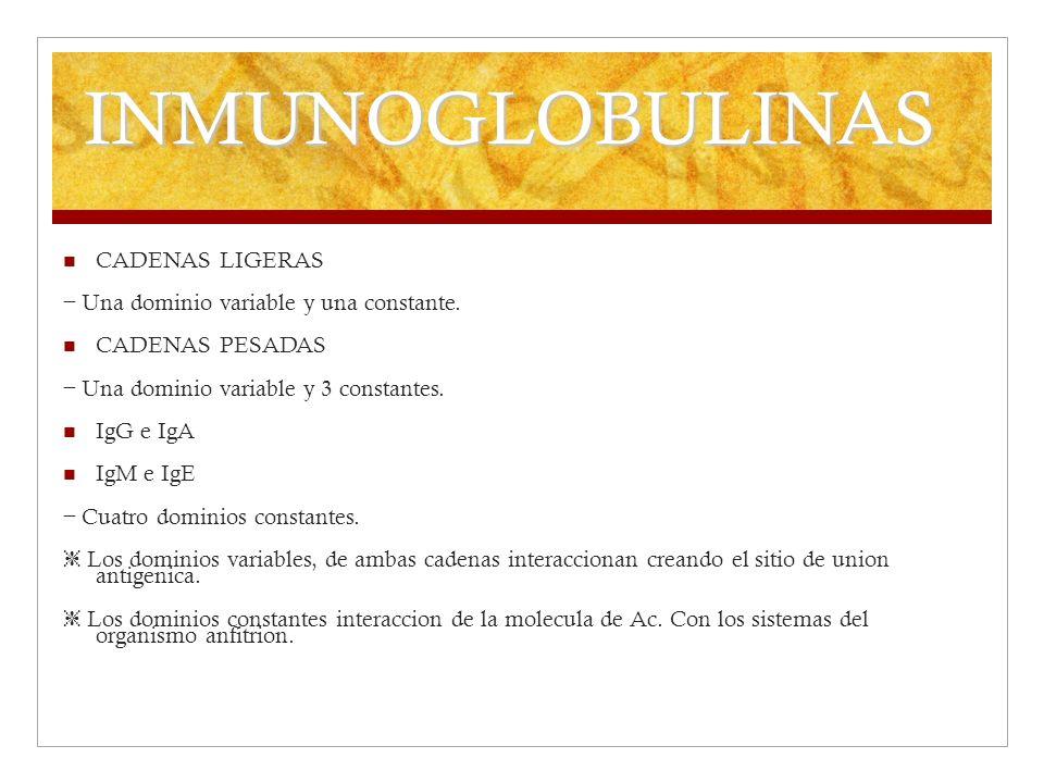 INMUNOGLOBULINAS CADENAS LIGERAS