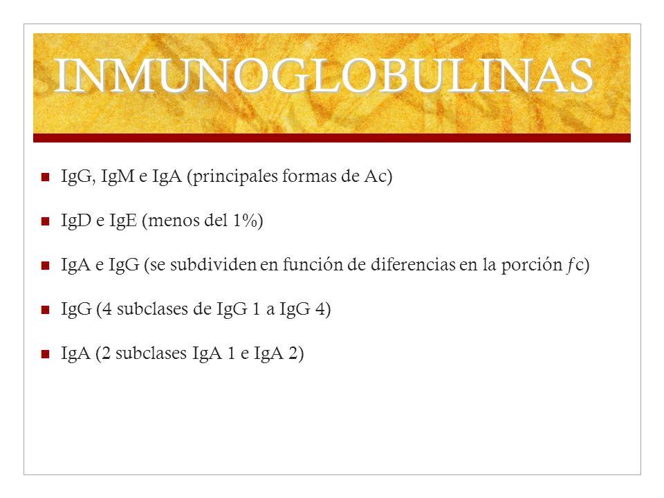 INMUNOGLOBULINAS IgG, IgM e IgA (principales formas de Ac)