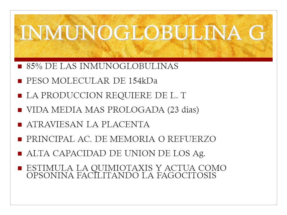 INMUNOGLOBULINA G 85% DE LAS INMUNOGLOBULINAS PESO MOLECULAR DE 154kDa
