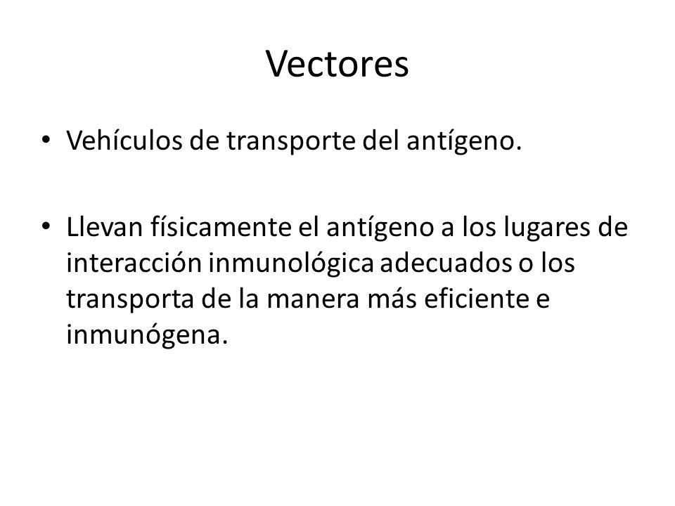Vectores Vehículos de transporte del antígeno.