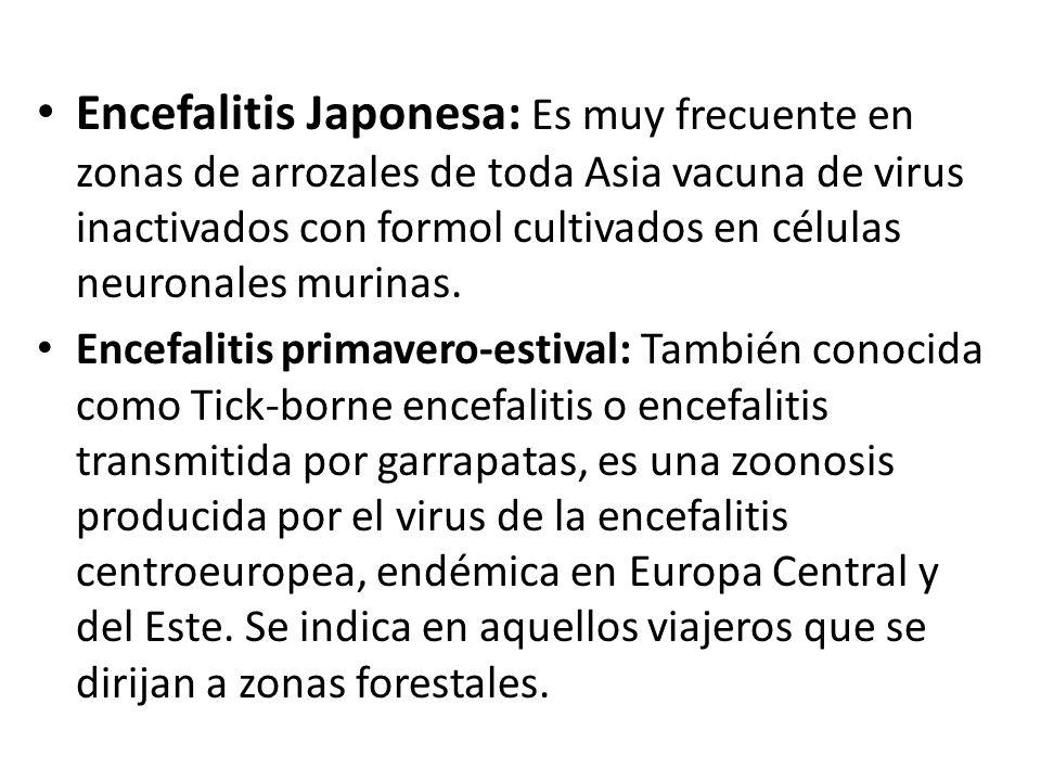 Encefalitis Japonesa: Es muy frecuente en zonas de arrozales de toda Asia vacuna de virus inactivados con formol cultivados en células neuronales murinas.