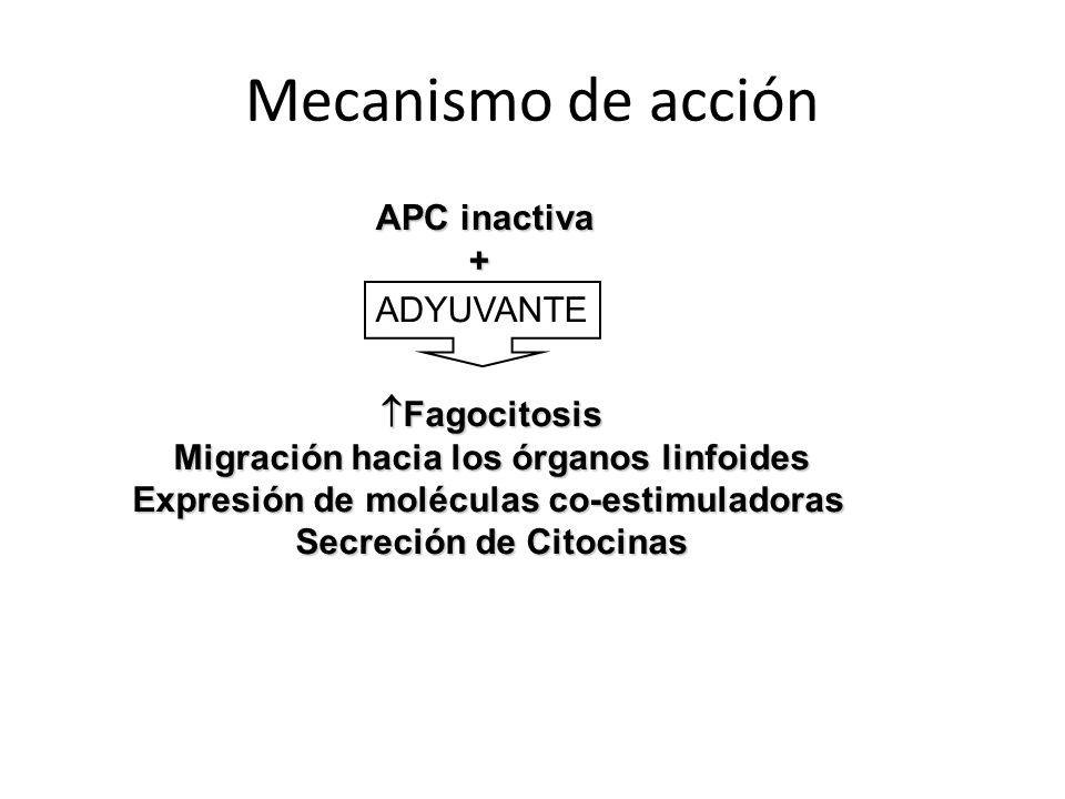 Mecanismo de acción APC inactiva + ADYUVANTE Fagocitosis