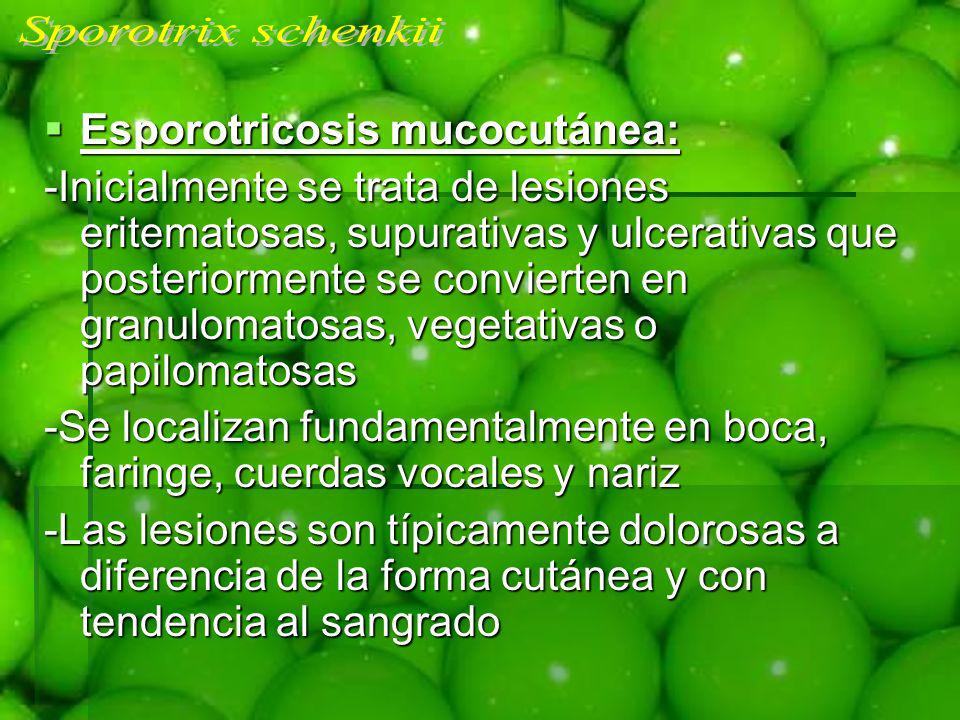Sporotrix schenkii Esporotricosis mucocutánea: