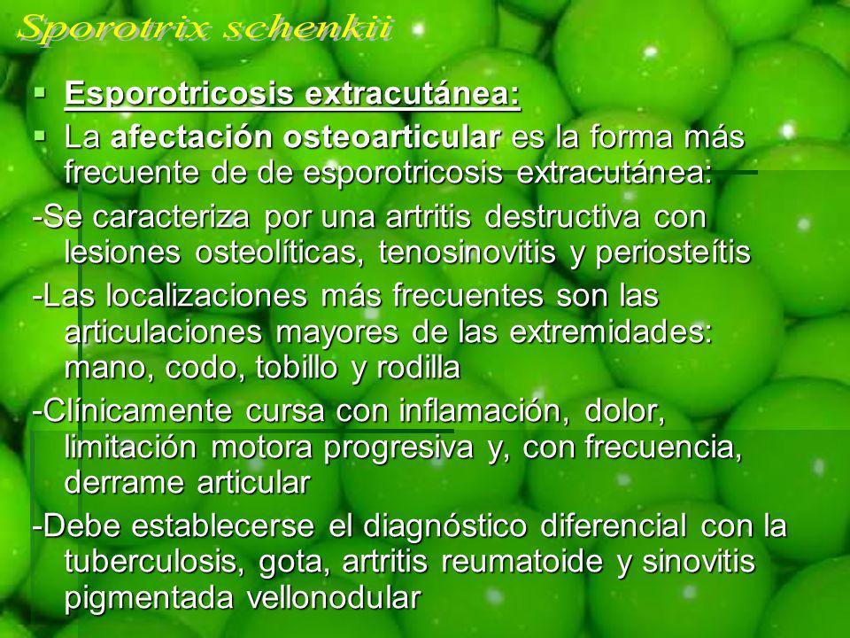 Sporotrix schenkii Esporotricosis extracutánea: