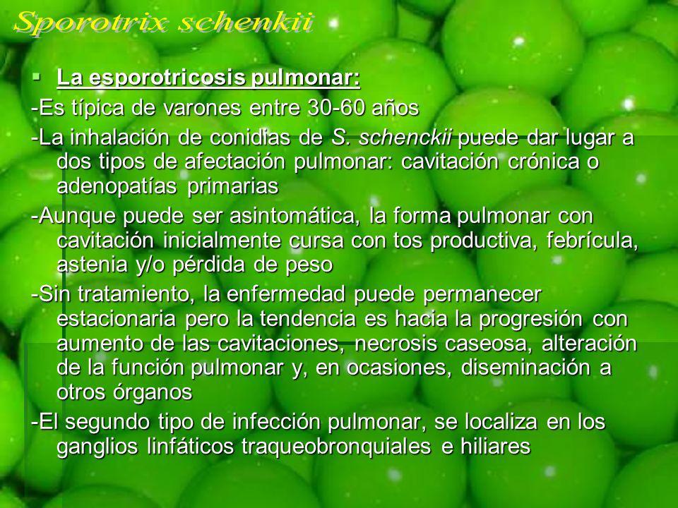 Sporotrix schenkii La esporotricosis pulmonar: