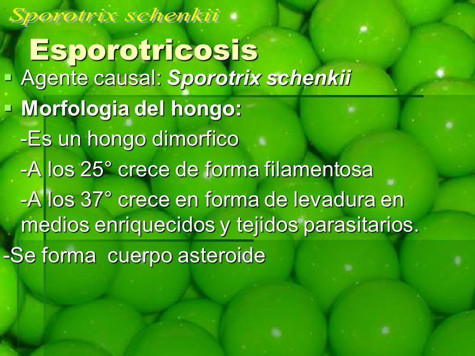 Esporotricosis Sporotrix schenkii Agente causal: Sporotrix schenkii