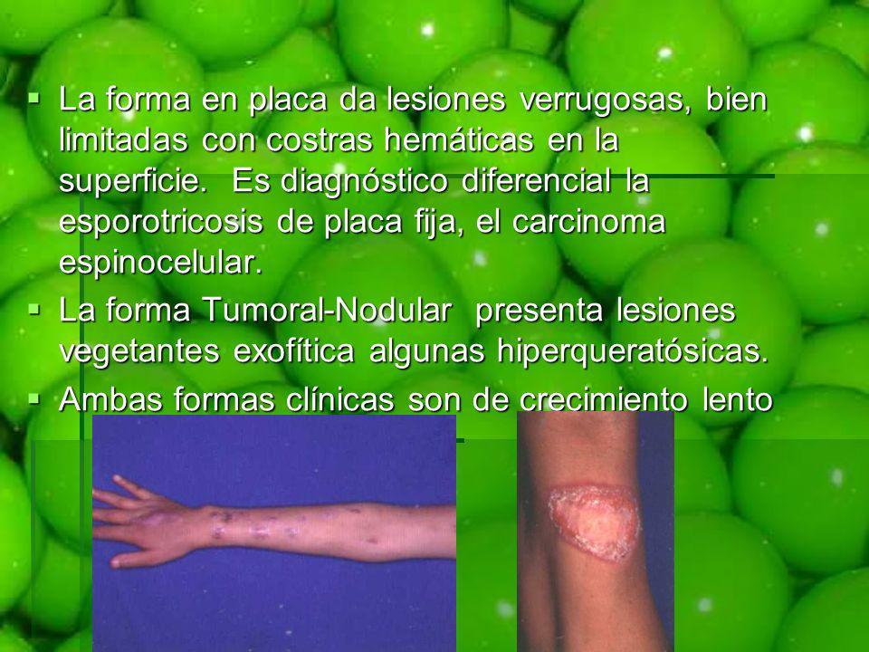La forma en placa da lesiones verrugosas, bien limitadas con costras hemáticas en la superficie. Es diagnóstico diferencial la esporotricosis de placa fija, el carcinoma espinocelular.