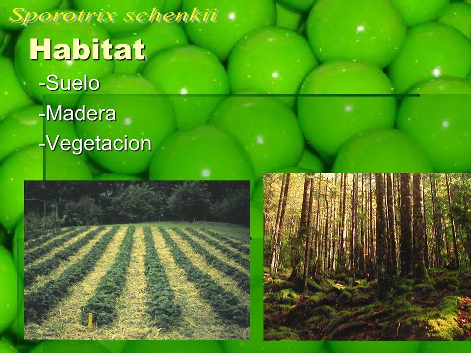 Sporotrix schenkii Habitat -Suelo -Madera -Vegetacion