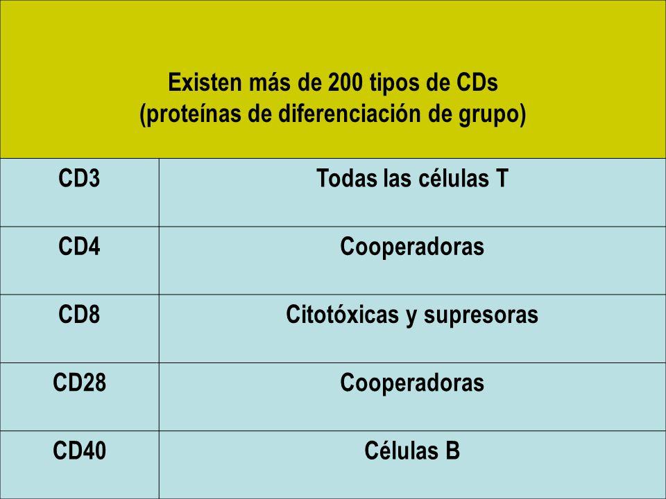 Existen más de 200 tipos de CDs (proteínas de diferenciación de grupo)