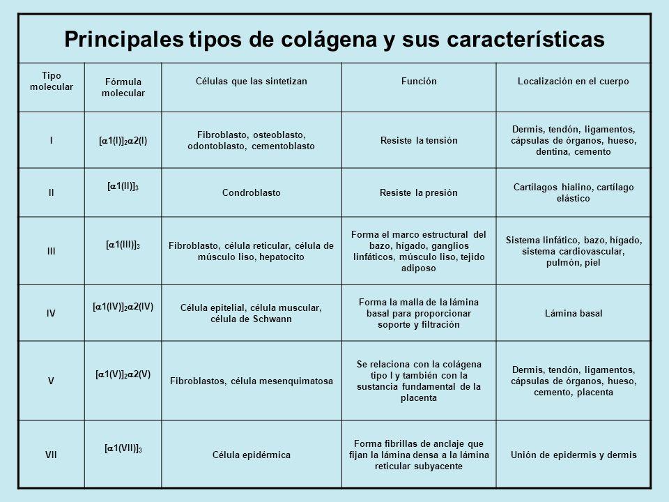 Principales tipos de colágena y sus características