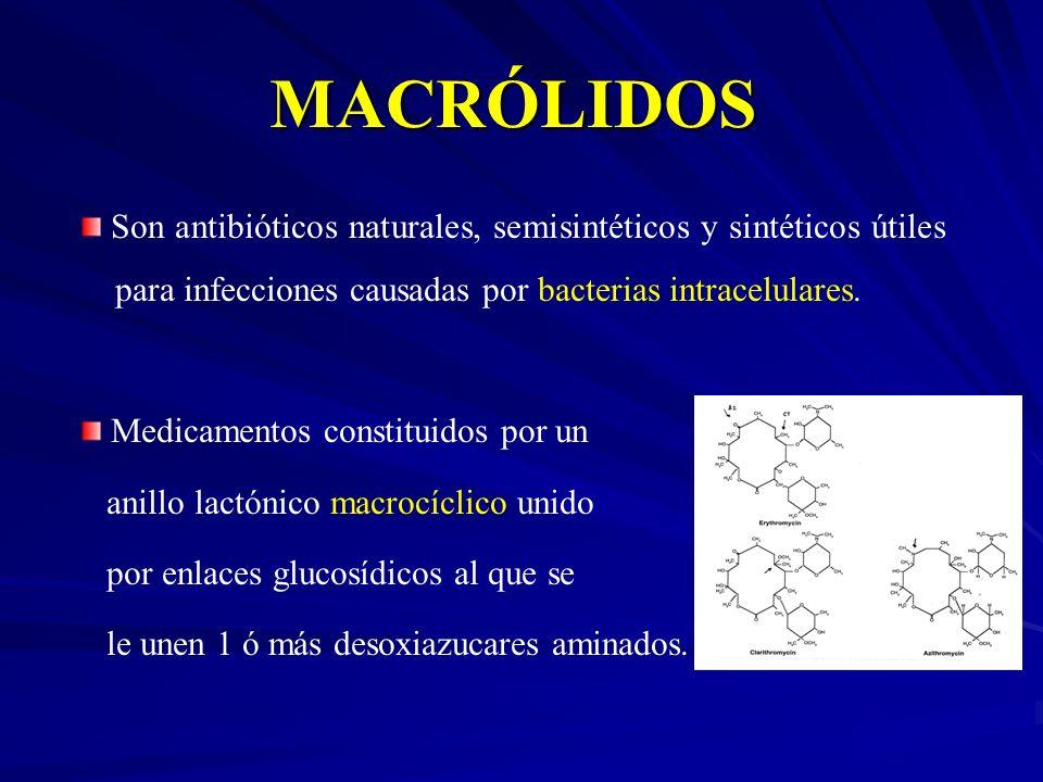 MACRÓLIDOS Son antibióticos naturales, semisintéticos y sintéticos útiles para infecciones causadas por bacterias intracelulares.