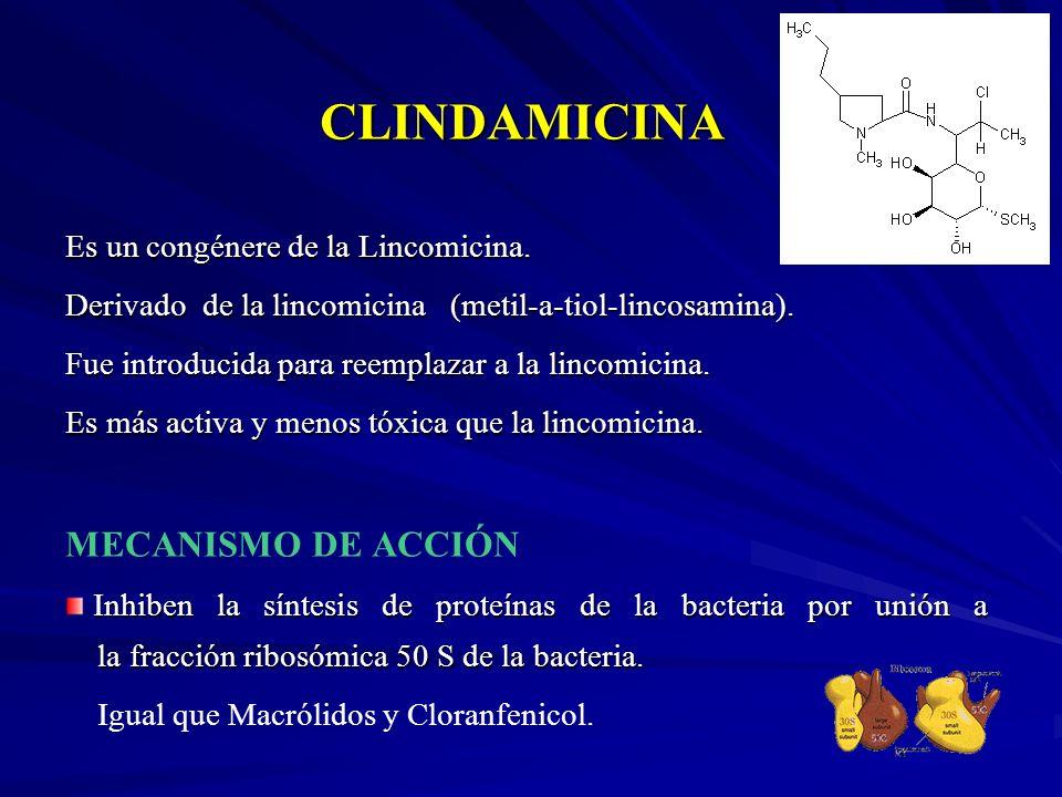 CLINDAMICINA MECANISMO DE ACCIÓN Es un congénere de la Lincomicina.