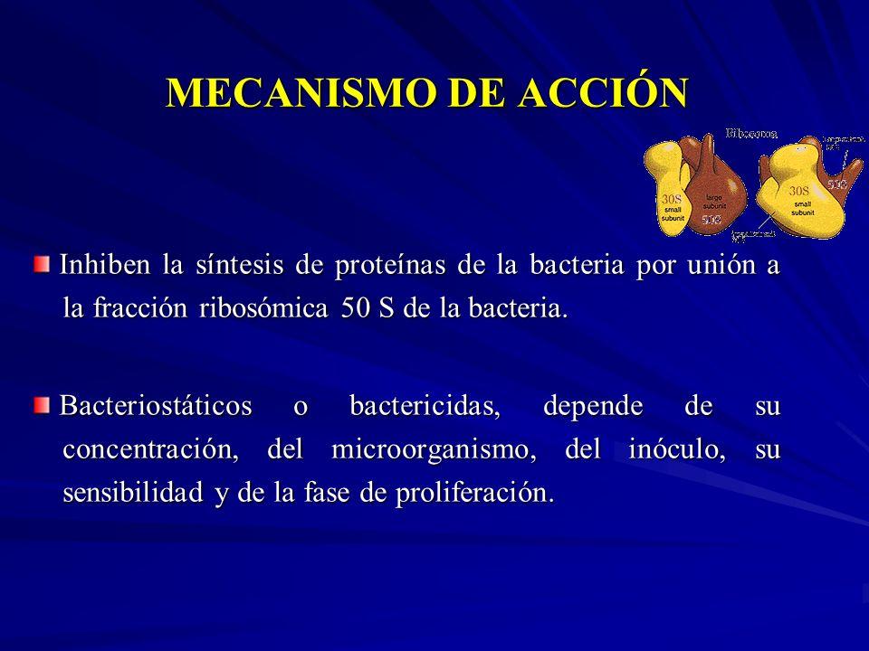MECANISMO DE ACCIÓNInhiben la síntesis de proteínas de la bacteria por unión a la fracción ribosómica 50 S de la bacteria.