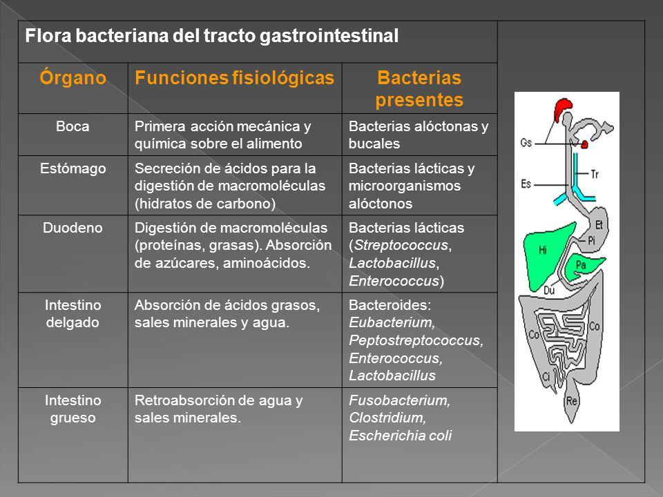 Funciones fisiológicas