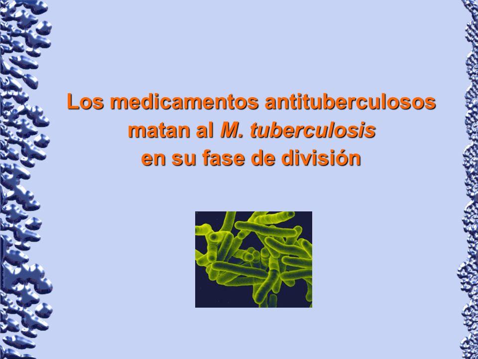Los medicamentos antituberculosos matan al M. tuberculosis
