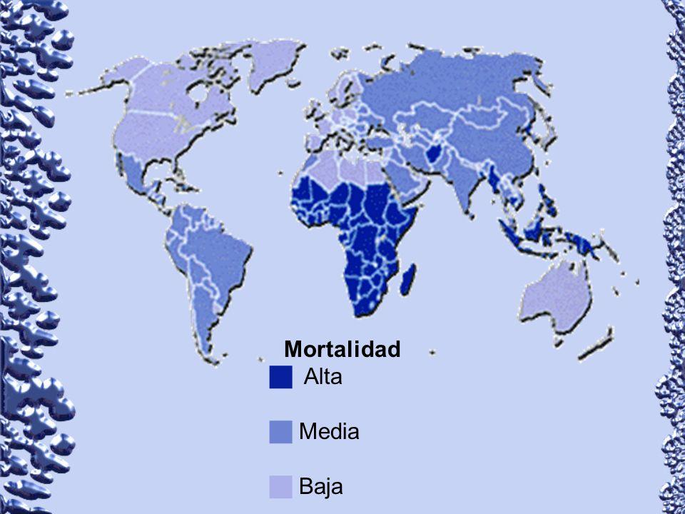Mortalidad g Alta g Media g Baja