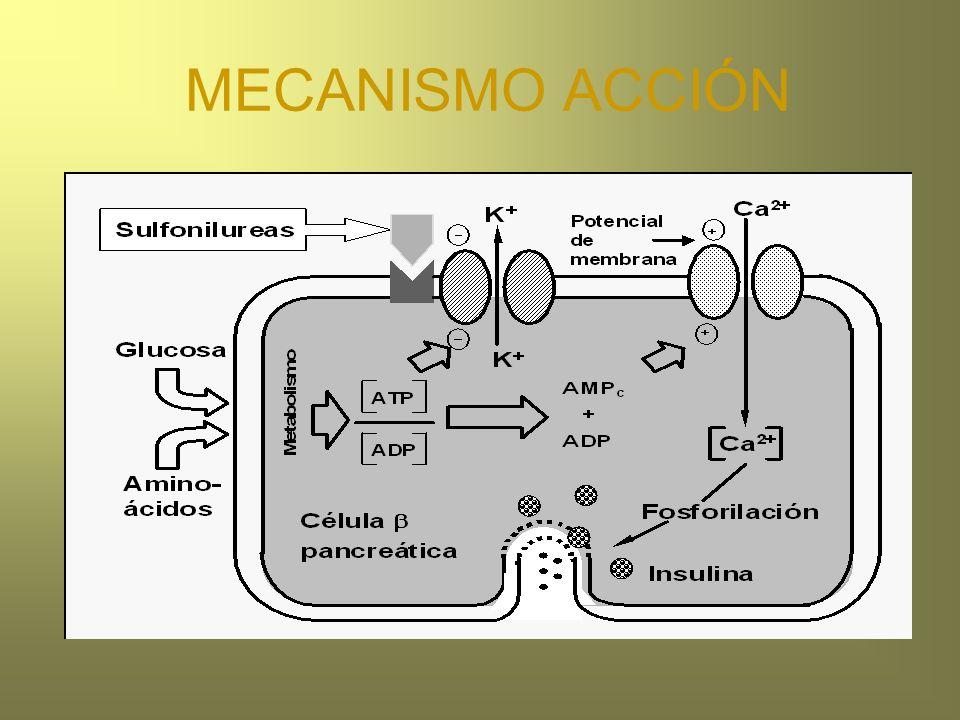 MECANISMO ACCIÓN