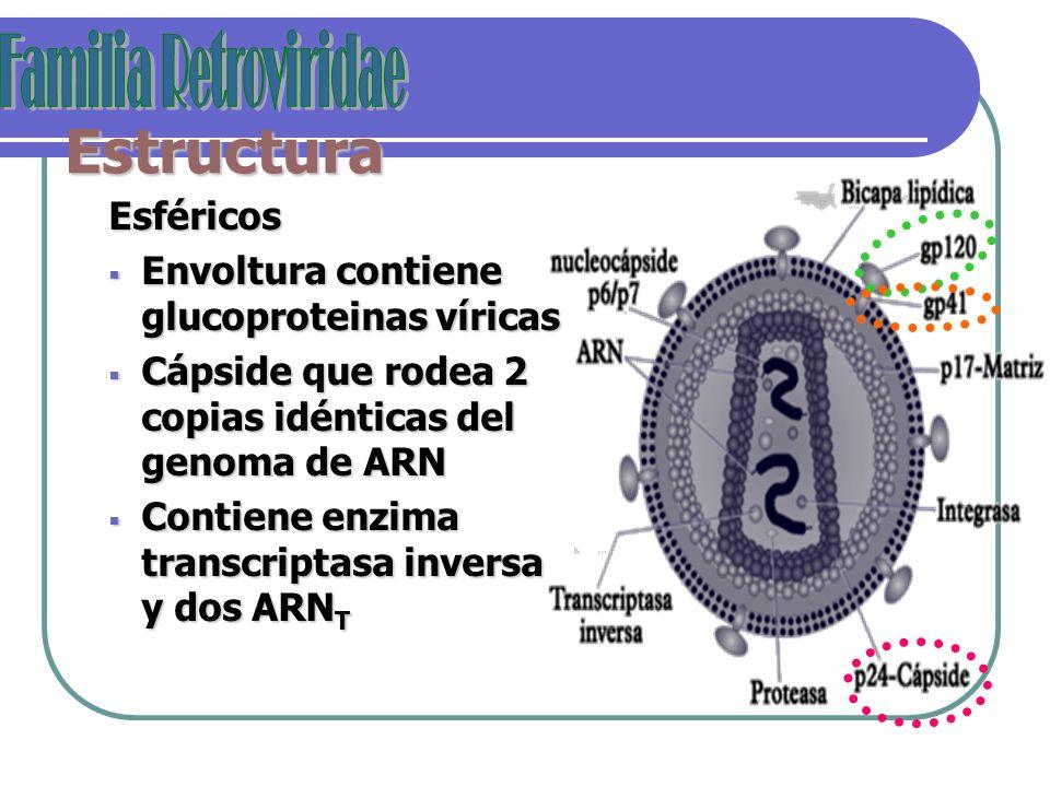 Estructura Familia Retroviridae Esféricos