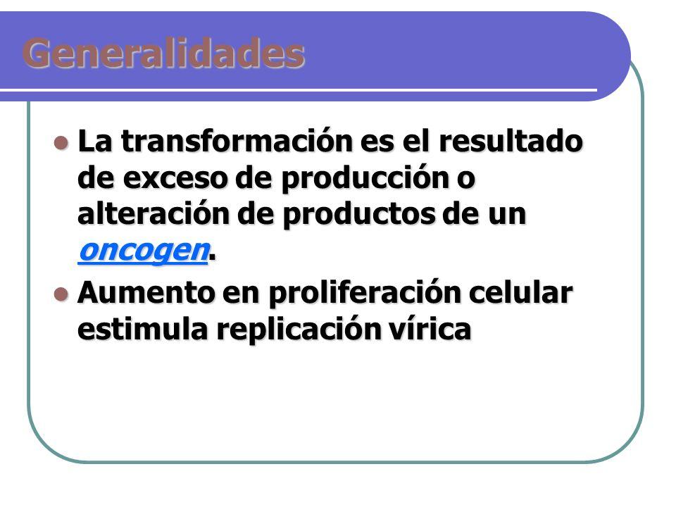 Generalidades La transformación es el resultado de exceso de producción o alteración de productos de un oncogen.