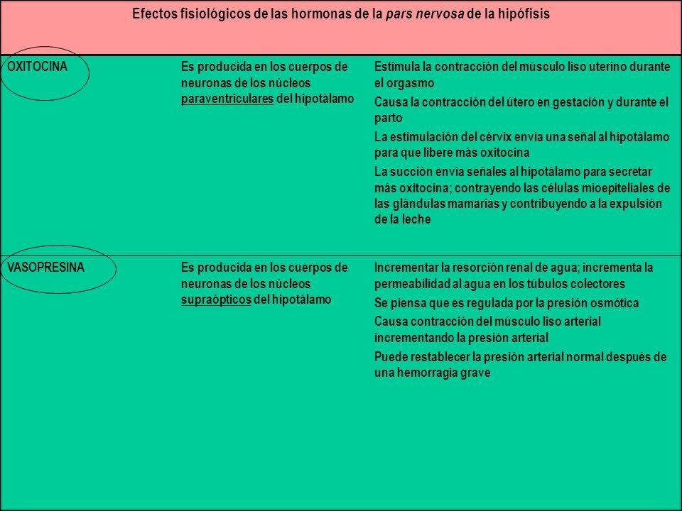 Efectos fisiológicos de las hormonas de la pars nervosa de la hipófisis