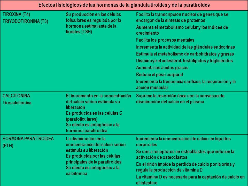 Efectos fisiológicos de las hormonas de la glándula tiroides y de la paratiroides