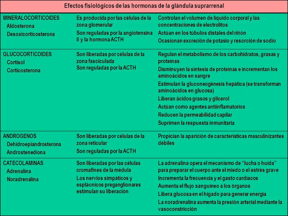 Efectos fisiológicos de las hormonas de la glándula suprarrenal