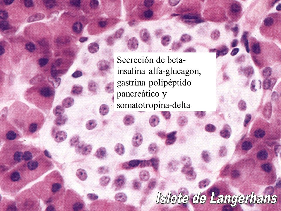 Secreción de beta-insulina alfa-glucagon, gastrina polipéptido pancreático y somatotropina-delta